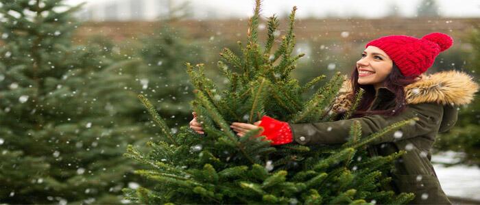 mujer que elige un árbol de Navidad natural