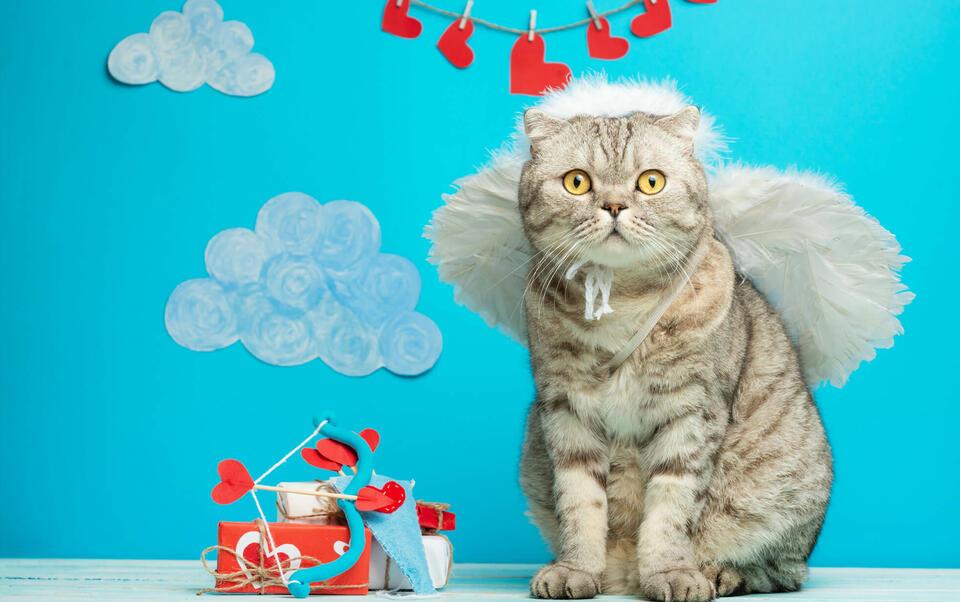 gato san valentín